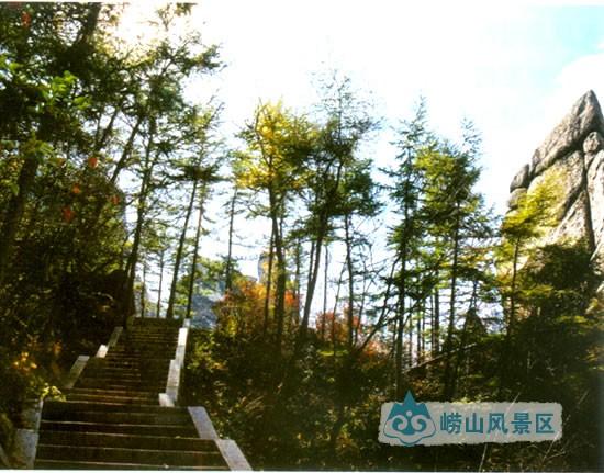 【崂山林场】|人文崂山 - 青岛崂山风景区